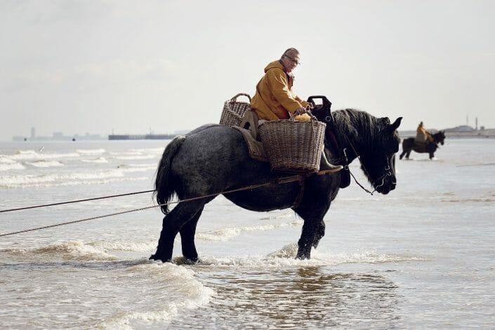 Hestefiskere langs Belgiens kyster